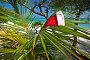 Шапочка Санты на пальмовой ветке, фото № 2153302, снято 30 марта 2017 г. (c) Михаил / Фотобанк Лори