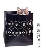 Купить «Кошка в подарочном пакете», фото № 2159458, снято 7 декабря 2009 г. (c) Наталья Бидюкова / Фотобанк Лори