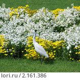 Птица на фоне цветов. Стоковое фото, фотограф Унчикова Екатерина Андреевна / Фотобанк Лори