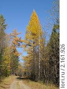 Купить «Лесная дорога», эксклюзивное фото № 2161926, снято 10 октября 2010 г. (c) Wanda / Фотобанк Лори