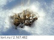 Купить «Проталина на снегу», фото № 2167482, снято 21 ноября 2010 г. (c) Вера Тропынина / Фотобанк Лори