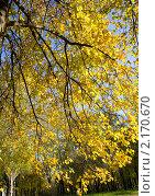 Купить «Золотая ветка», фото № 2170670, снято 24 октября 2010 г. (c) ИВА Афонская / Фотобанк Лори
