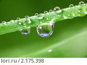 Купить «Капля воды», фото № 2175398, снято 27 февраля 2009 г. (c) Иван Михайлов / Фотобанк Лори