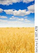 Купить «Пшеничное поле», фото № 2187478, снято 15 августа 2010 г. (c) Яков Филимонов / Фотобанк Лори