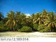 Пальмовый берег. Стоковое фото, фотограф Сергеева Дарья / Фотобанк Лори