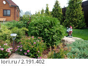 Купить «Ландшафтный дизайн на участке с загородным домом», фото № 2191402, снято 4 августа 2010 г. (c) Мовчан Ольга / Фотобанк Лори