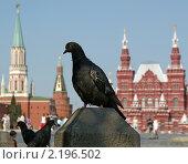 Купить «Голуби на Красной площади в летний день, Москва, Россия», фото № 2196502, снято 12 августа 2010 г. (c) Владимир Журавлев / Фотобанк Лори