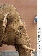 Слон. Стоковое фото, фотограф Дмитрий Неумоин / Фотобанк Лори
