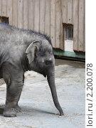 Купить «Московский зоопарк. Слон», эксклюзивное фото № 2200078, снято 28 апреля 2010 г. (c) Дмитрий Неумоин / Фотобанк Лори