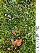 Купить «Земля Франца-Иосифа. флора», фото № 2204482, снято 6 августа 2010 г. (c) Владимир Мельник / Фотобанк Лори