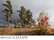 Купить «Осенний пейзаж с березами и соснами», фото № 2212670, снято 25 сентября 2010 г. (c) Виталий Горелов / Фотобанк Лори
