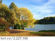 Купить «Ива на берегу небольшого озера золотой осенью», фото № 2227106, снято 26 сентября 2006 г. (c) Михаил Марковский / Фотобанк Лори
