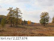 Купить «Осенний пейзаж с березами  соснами и лиственницами», фото № 2227674, снято 2 октября 2010 г. (c) Виталий Горелов / Фотобанк Лори