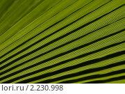 Купить «Лист», фото № 2230998, снято 17 августа 2009 г. (c) Константин Безденежных / Фотобанк Лори