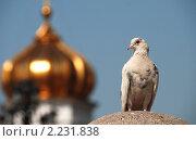 Купить «Белый голубь на фоне золотого купола Храма Христа Спасителя», эксклюзивное фото № 2231838, снято 19 июля 2010 г. (c) lana1501 / Фотобанк Лори