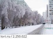 Купить «После ледяного шторма», фото № 2250022, снято 27 декабря 2010 г. (c) Сергей Лаврентьев / Фотобанк Лори