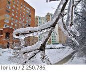 Купить «Ветви деревьев в ледяном панцире. Последствия ледяного дождя», фото № 2250786, снято 28 декабря 2010 г. (c) Владимир Сергеев / Фотобанк Лори