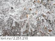 Купить «Последствия ледяного дождя в Москве», фото № 2251210, снято 28 декабря 2010 г. (c) Наталья Волкова / Фотобанк Лори