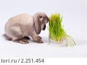 Купить «Кролик и куст», фото № 2251454, снято 21 ноября 2018 г. (c) Илья Малышев / Фотобанк Лори
