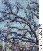 Дерево в сумерках. Стоковая иллюстрация, иллюстратор Фомченкова Юлия / Фотобанк Лори