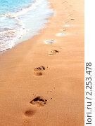 Купить «Следы на песке вдоль кромки моря», фото № 2253478, снято 26 ноября 2010 г. (c) Михаил Коханчиков / Фотобанк Лори