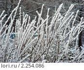 Купить «Обледенелые ветви после ледяного дождя», эксклюзивное фото № 2254086, снято 30 декабря 2010 г. (c) lana1501 / Фотобанк Лори