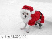 Купить «Недовольный Дед Мороз», фото № 2254114, снято 1 января 2011 г. (c) Валерия Попова / Фотобанк Лори