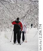 Лыжники в зимнем лесу. Стоковое фото, фотограф lana1501 / Фотобанк Лори