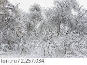 Купить «Зима в Битцевском лесопарке», фото № 2257034, снято 1 января 2011 г. (c) Алёшина Оксана / Фотобанк Лори
