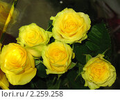 Букет желтых роз. Стоковое фото, фотограф Андрей Манейло / Фотобанк Лори