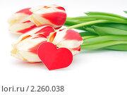 Тюльпаны и сердечко на белом фоне. Стоковое фото, фотограф Павел Воробьёв / Фотобанк Лори