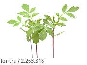 Молодые растения. Стоковое фото, фотограф Галина Афанасьева / Фотобанк Лори
