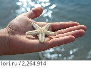 Купить «Морская звезда на ладони», фото № 2264914, снято 23 декабря 2010 г. (c) Вера Тропынина / Фотобанк Лори