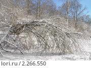 Купить «Зимний пейзаж . Дерево, склонившееся под тяжестью снега», эксклюзивное фото № 2266550, снято 7 января 2011 г. (c) Валерия Попова / Фотобанк Лори