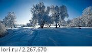 Деревья на Андреевском лугу. Стоковое фото, фотограф Galina Semenova / Фотобанк Лори