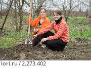 Купить «Женщины с лопатой сажают дерево», фото № 2273402, снято 1 мая 2010 г. (c) Яков Филимонов / Фотобанк Лори