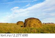 Стога сена осенью. Стоковое фото, фотограф Геннадий Распопов / Фотобанк Лори
