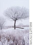 Купить «Заснеженное дерево», фото № 2277810, снято 26 декабря 2010 г. (c) Купченко Владимир Михайлович / Фотобанк Лори