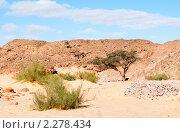 Купить «Растения пустыни. Цветной каньон. Синай. Египет», фото № 2278434, снято 8 января 2011 г. (c) Екатерина Овсянникова / Фотобанк Лори
