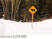 Купить «Дорожный знак с коровой в зимнем лесу», фото № 2279050, снято 22 ноября 2010 г. (c) Ирина Кожемякина / Фотобанк Лори