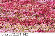 Купить «Цветы», фото № 2281142, снято 2 августа 2010 г. (c) Лагутин Сергей / Фотобанк Лори