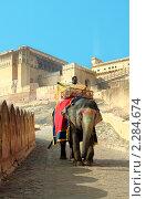 Купить «Слон - картина с погонщиком внутри форта Амбер, Индия, Джайпур», фото № 2284674, снято 5 декабря 2010 г. (c) Вера Тропынина / Фотобанк Лори