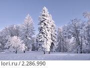 Купить «Сиреневые сумерки в  зимнем лесу. Иматра, Финляндия», фото № 2286990, снято 24 января 2010 г. (c) Татьяна Савватеева / Фотобанк Лори