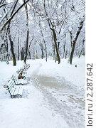 Зимний городской парк. Стоковое фото, фотограф Юрий Брыкайло / Фотобанк Лори