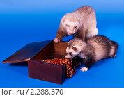 Купить «Подарок любимой», фото № 2288370, снято 21 апреля 2010 г. (c) Ирина Кожемякина / Фотобанк Лори