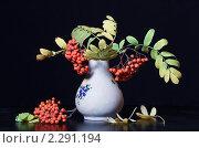 Купить «Рябина», фото № 2291194, снято 9 октября 2010 г. (c) Сергей Семин / Фотобанк Лори