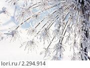 Купить «Борщевик в инее», фото № 2294914, снято 23 января 2011 г. (c) Екатерина Тарасенкова / Фотобанк Лори