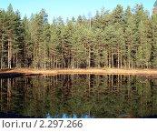Купить «Сосновый бор», фото № 2297266, снято 29 января 2020 г. (c) Алексей Кокоулин / Фотобанк Лори