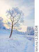Купить «Зимний пейзаж», фото № 2302834, снято 6 декабря 2010 г. (c) Майя Крученкова / Фотобанк Лори