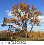 Осеннее дерево. Стоковое фото, фотограф Дмитрий Куома / Фотобанк Лори